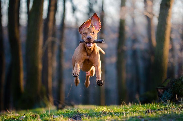 Descubre cómo adiestrar a un perro guardián en Blog Prosegur.